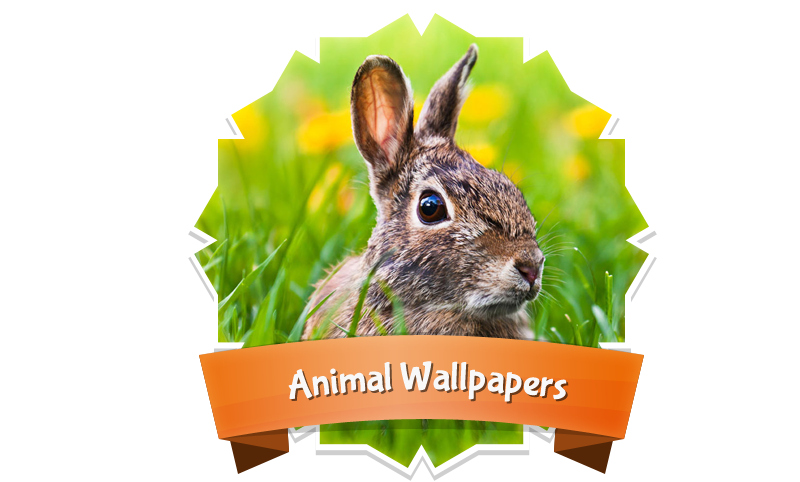 Animal-Wallpapers